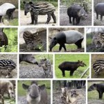 "16 tapirs who think your attitude to ""sponsored content"" sucks"